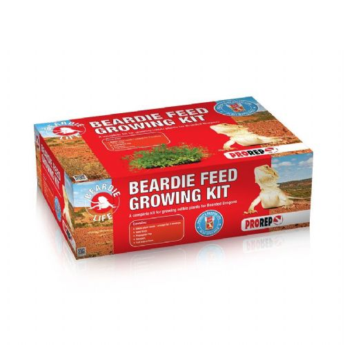 PR Beardie Feed Growing Kit, KPT055